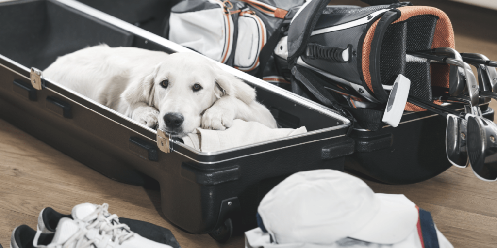 dog and golf clubs sitting in golf travel bag